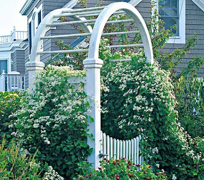 Skillins garden log garden talks july 9 hydrangea blue clematis this picture is not a blue hydrangea it is a clematis paniculata by white flower farms i write about it further down this post mightylinksfo