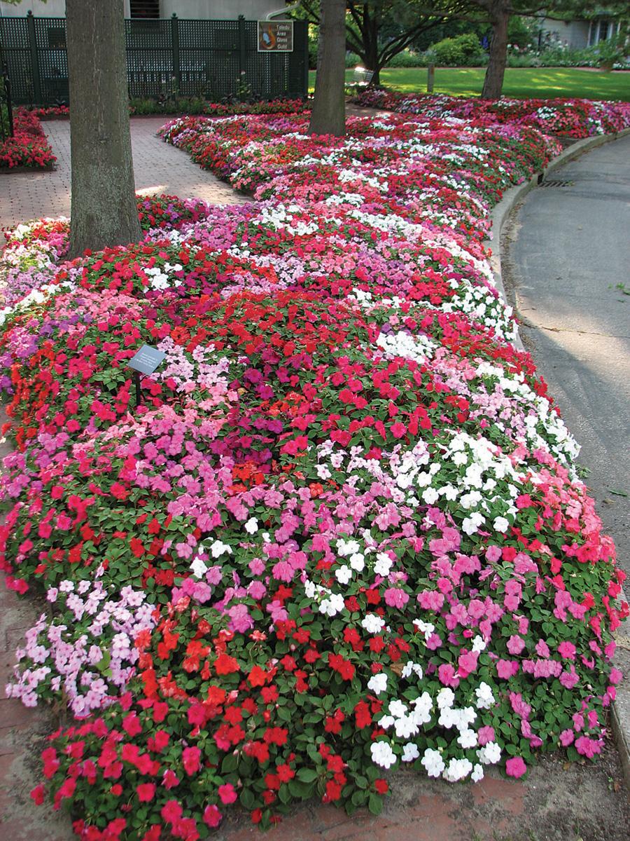 Названия и фото низкорослых цветов для клумбы