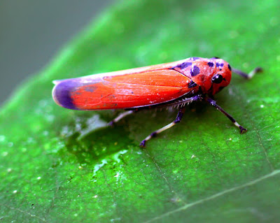 ... of Amazingly Colourful Insects - Awesome Digital Macro Photography  Insects