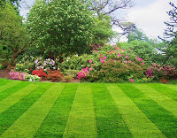 lovely landscape lawn flowers trees shrubs