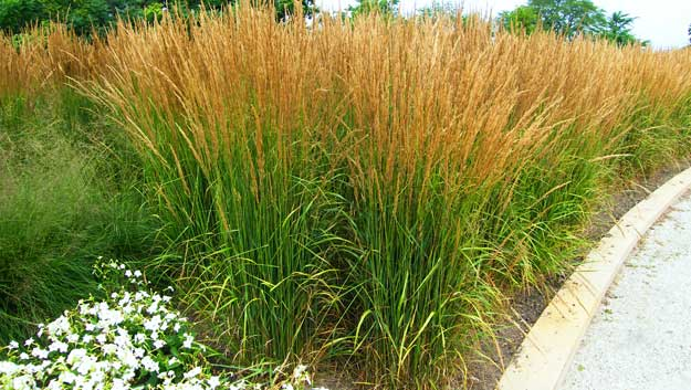 Dutch touch blog stay informed selecting grass for your - Garden design using grasses ...