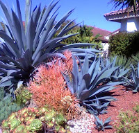 Even drought resistant plants require additional watering until established (usually three to six months).