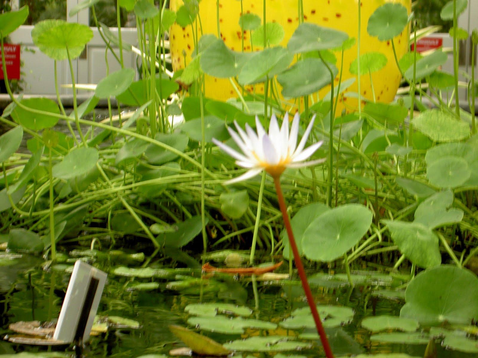 Etsy newyork street team indie artists artisans Bronx botanical garden free admission