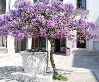 Venezia fiorita - Alberello da giardino ...