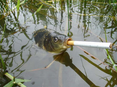 FUNNY SMS AND JOKES: Smoking Fish