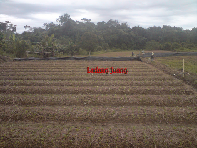 ladang Juang