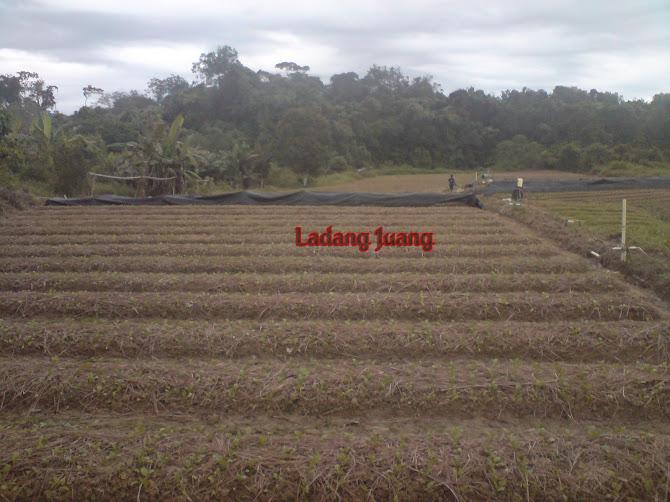 ladang Juang