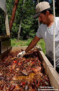 Photojournalism lenten mudbugs for Fish farms in texas