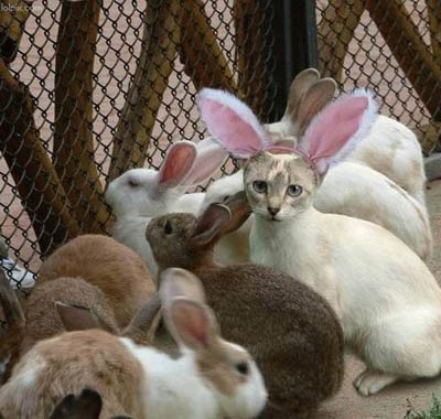 easter bunny pics. happy easter bunny funny