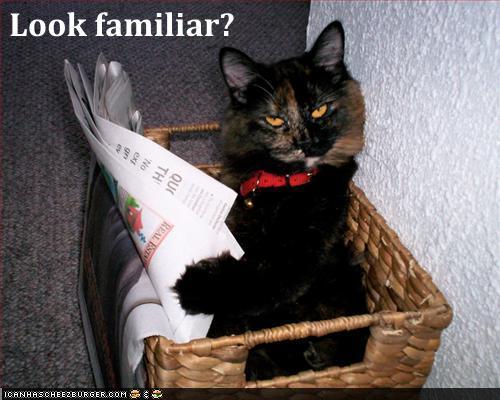 http://3.bp.blogspot.com/_8-YiLpKU6oo/TSEeiW0_G5I/AAAAAAAABk0/ZzSIi4yfqTY/s1600/cat+-+newspaper.jpg
