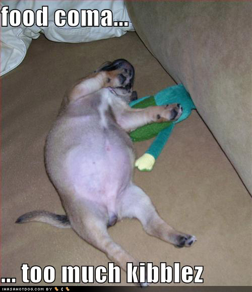 [loldogs-cute-puppy-pictures-foodcoma.jpg]