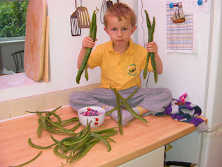 harvesting home-grown runner beans