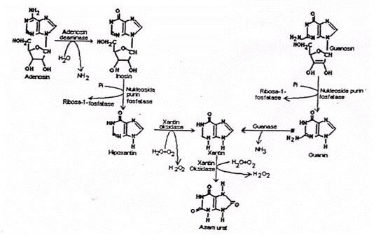 Dna blog asam nukleat penemuan bahwa informasi genetik dikodekan di sepanjang sebuah molekul polimerik yang hanya tersusun atas empat tipe unit monomer merupakan salah satu ccuart Images