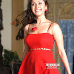 South Indian Actress Manjari Fadnis Photos   Red Hot