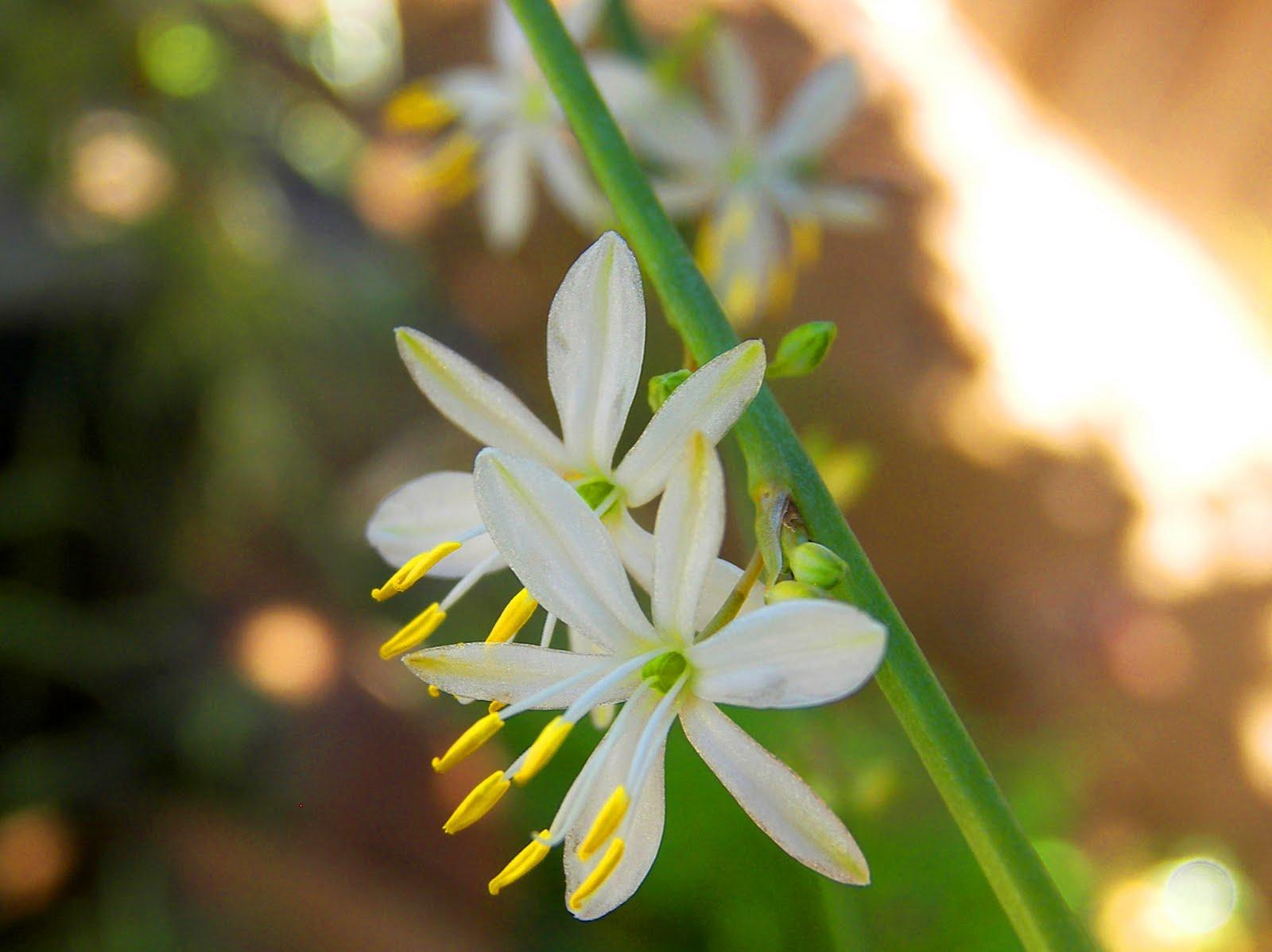 Mastering Horticulture Appreciating Detail Through my Camera