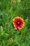 Flower ....
