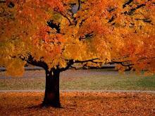 ·autumn·