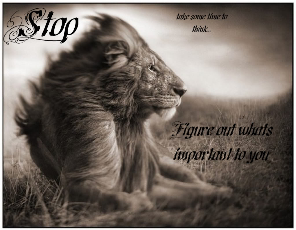 King And Queen Love Quotes Lion Pictures With Love Quotes