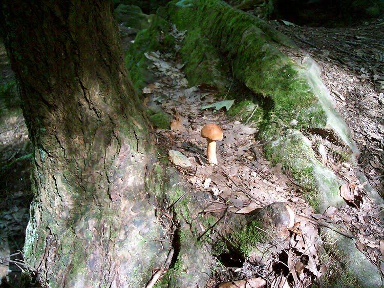 McConnells Mill - Kildoo Trail Mushroom