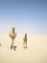Sinai Desert- Egypt