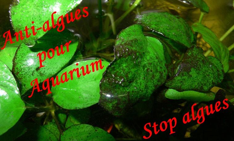 Produits anti algues engrais pour aquarium conditionneur for Gros aquarium pas cher