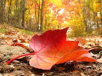 Y...llegó el otoño (con música)