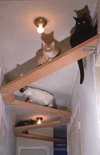 C mo hacer una casa al m s puro estilo the cats 39 house - Casas para gatos de madera ...