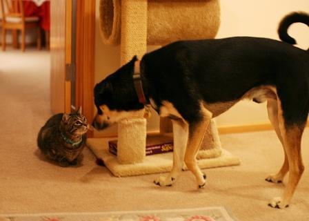 Gatos en casa consejos para introducir un perro en una - El gato en casa ...