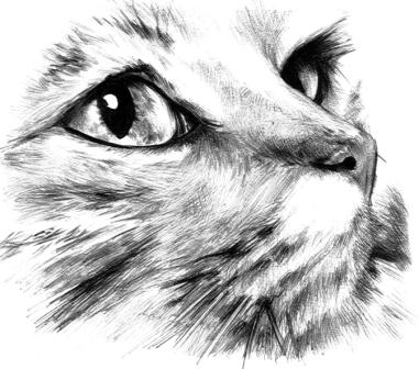 Dibujos de gatos dibujo a lpiz de un gato soador  Gatosblog