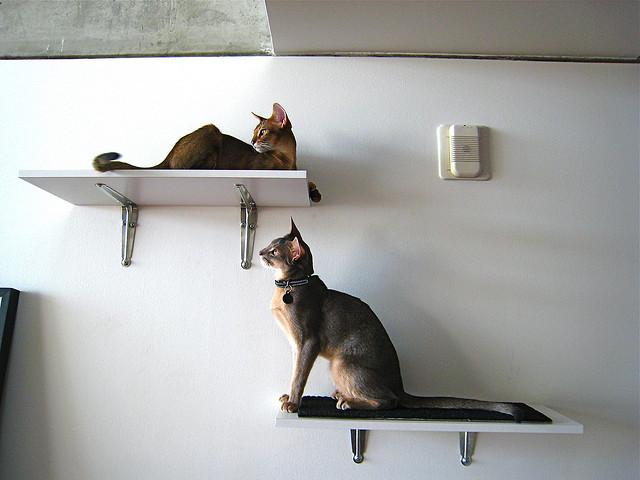 Estanter as para que los gatos recorran las paredes - Estanterias para gatos ...