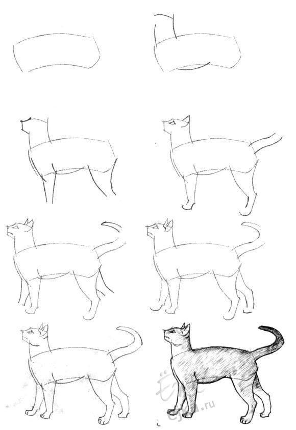нарисовать кошку карандашом картинки