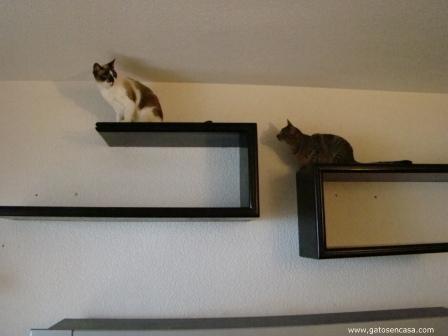 Estanter a pasarela de gatos con muebles de la basura - Estanterias para gatos ...