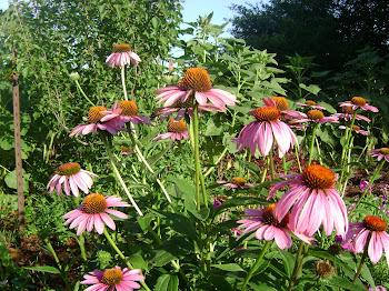 Scenes from my Garden