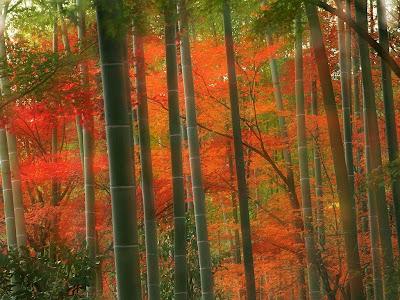 wallpaper japan. Japan Wallpaper