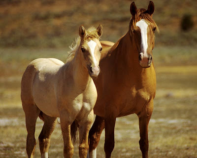 horses wallpapers. Horses Wallpaper Horse
