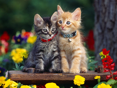 cute kitten wallpaper. Cats Wallpapers part 1