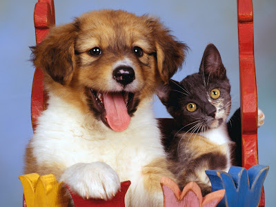 pics of puppies and kittens together. PUPPIES AND KITTENS TOGETHER