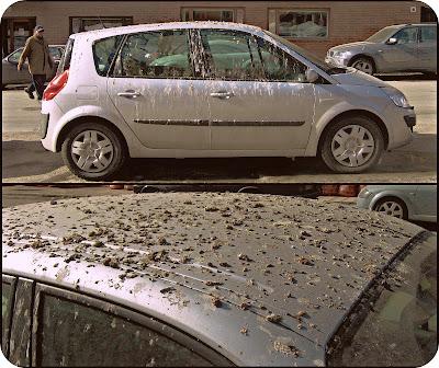 Fåglar har skändat denna bil.