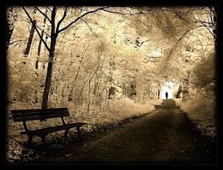 road , tree , agacli yol