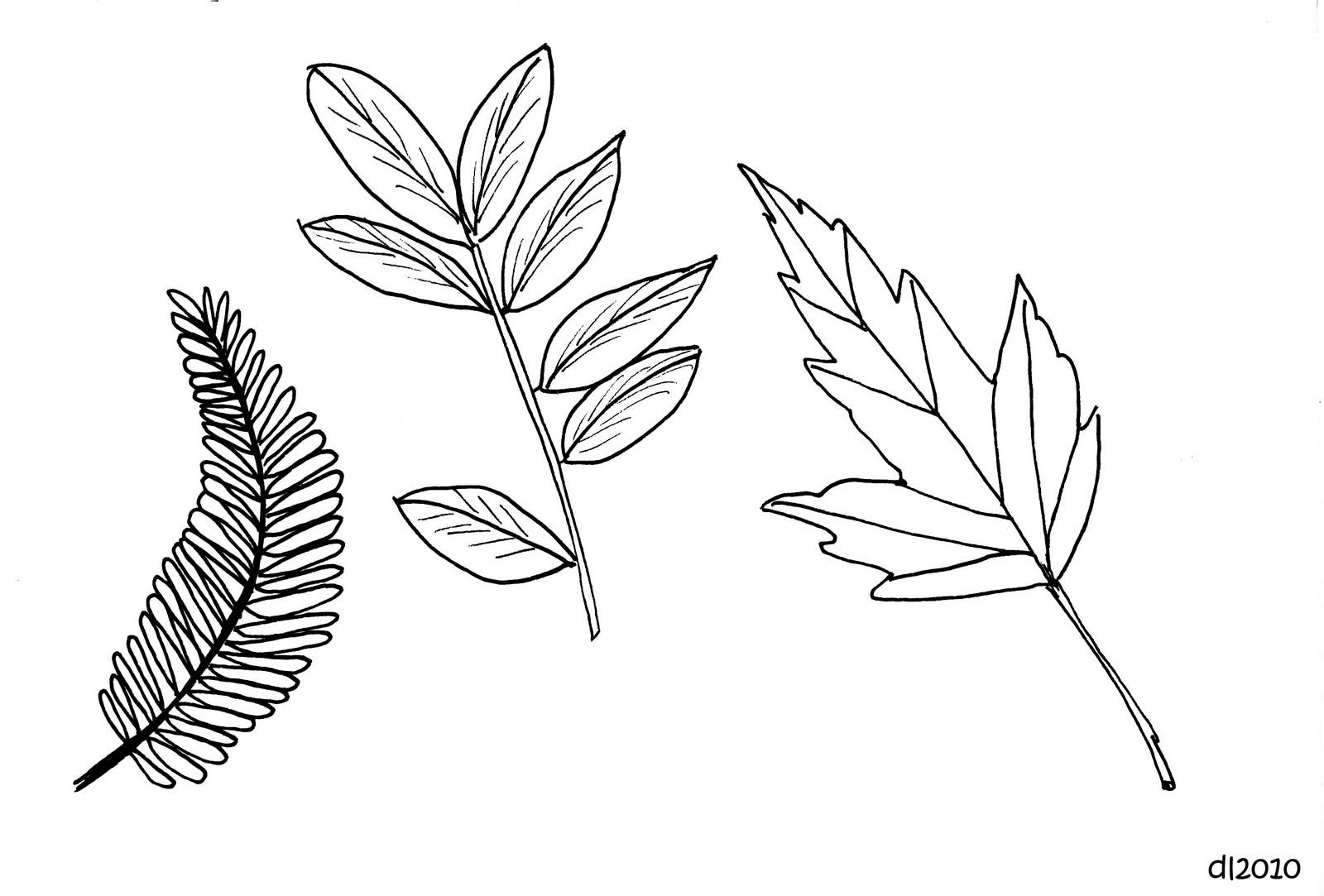 Autumn Leaves Falling Drawing Traffic Club