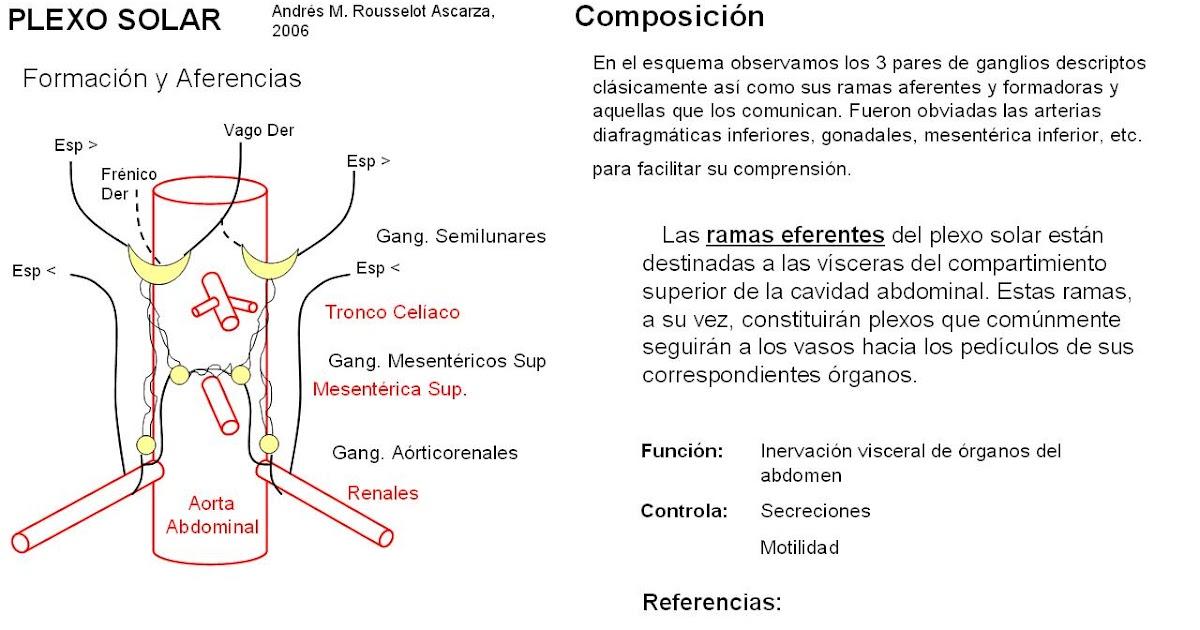 Perfecto Diagrama De La Anatomía Cerdo Viñeta - Anatomía de Las ...