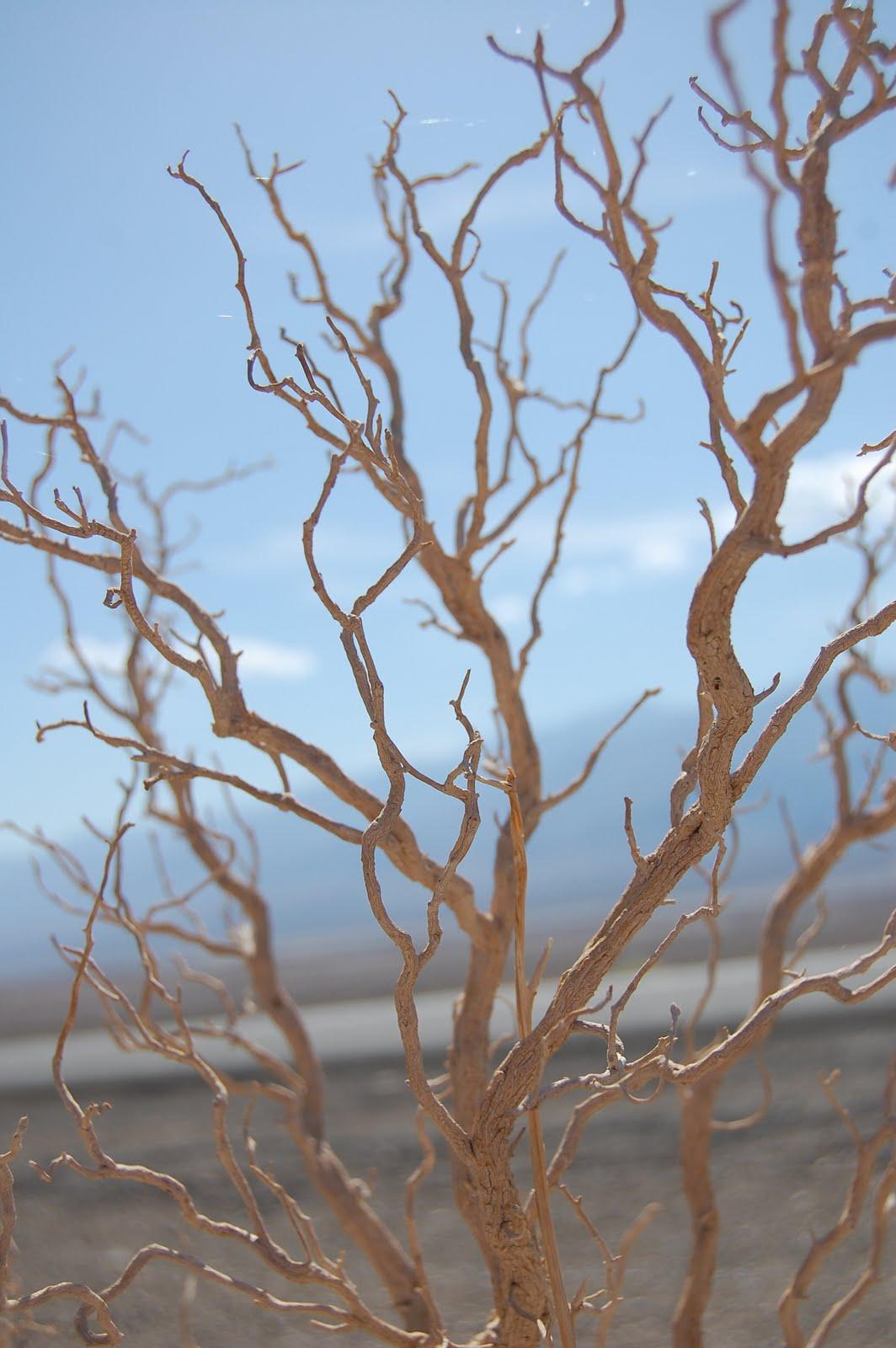 [branch]