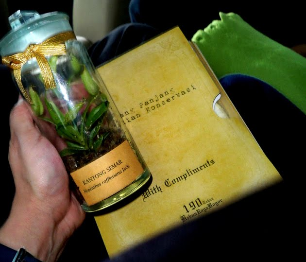 A Token from LIPI, Nepenthes rafflesiana jack (Kantong Semar)