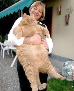 Suka komik Garfield, kucing gendut yang lucu, yang juga