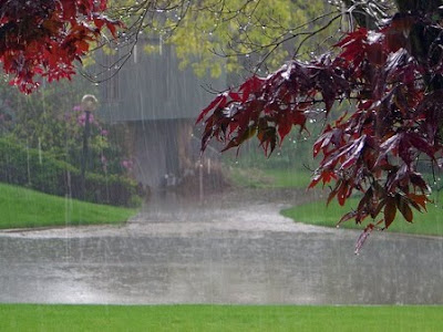 Background  Photography on Free Rain Wallpapers  Beautiful Rain Pictures  Rain Background Photos