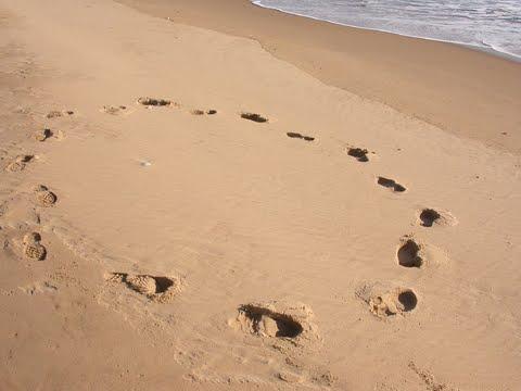 [footprints+in+circle+graphic.jpg]