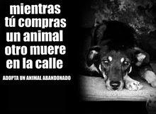 De Punta en Blanco lucha por el respeto y dignidad de los animales