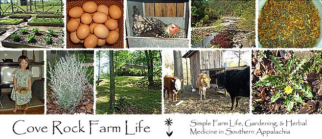 Cove Rock Farm Life