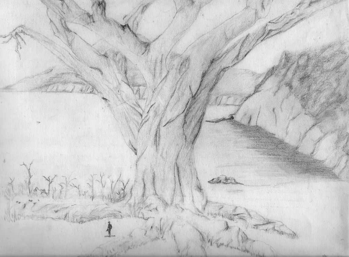 Árboles dibujados a lápiz - Imagui