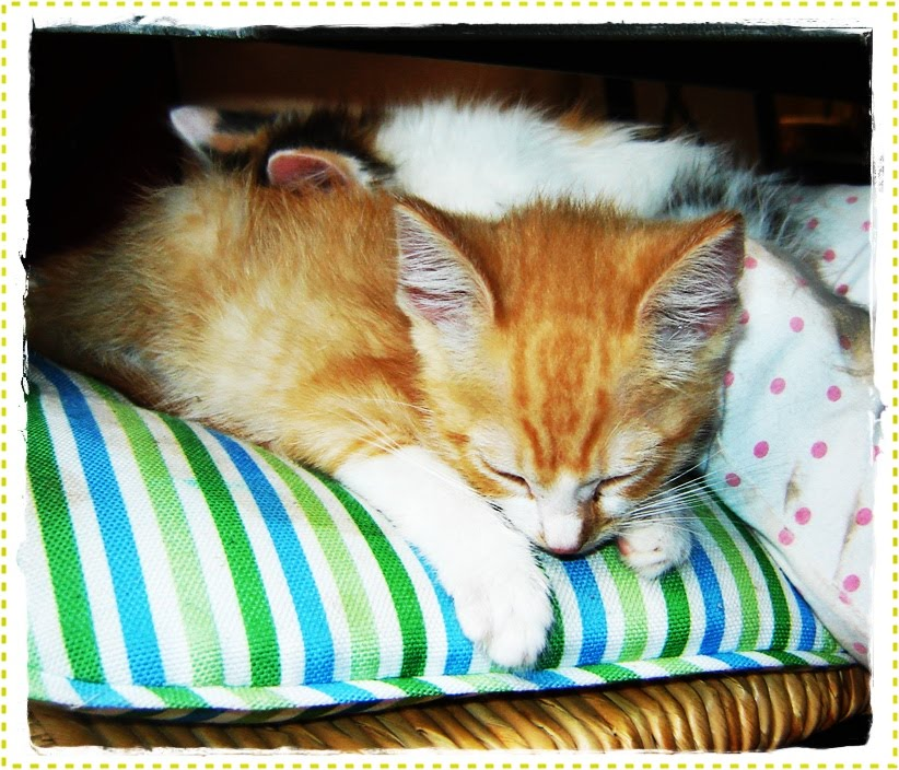puppies and kittens sleeping. puppies and kittens sleeping